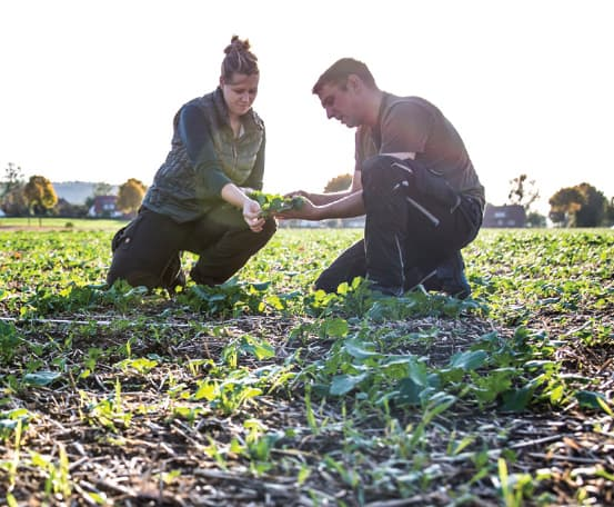 Two people in a field examining a plant.