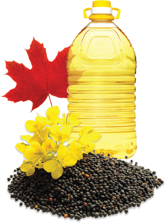 Canola seeds, flowers and a container of canola oil with a maple leaf.